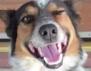 Едно овчарско куче ни показа какво е истинска дисциплина