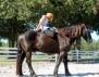 Йога с кон. Уникална гледка! (Видео)