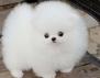Най-сладките пухкави същества, които сте виждали (снимки)