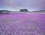 Пустинните цветя – една удивителна гледка!
