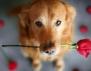 Уникално! Как добри хора рискуваха живота си заради бездомно куче (видео)