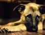 Каква е разликата между кучешкия и човешкия живот?