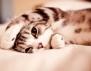 Най-готината аларма... Котката! (видео)