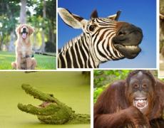 Няколко животни ви приканват да се усмихнете