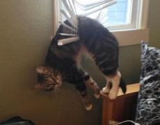 Смях! Кучета и котки в странни пози и ситуации (снимки)