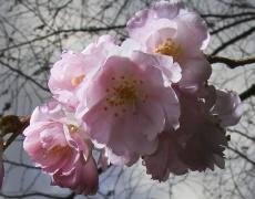 Виж своята зодия според японския хороскоп