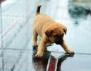 Добро дело! Спасиха малки кученца от стъклен мост