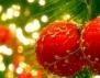 Коледни задължения