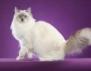 """Международна изложба на котки в музея """"Земята и хората"""""""