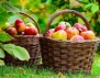 Как съхраняваме по-добре плодове и зеленчуци