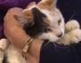 Котка оцелява след 6 седмици в комин
