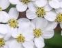 Няколко билки срещу зимна депресия