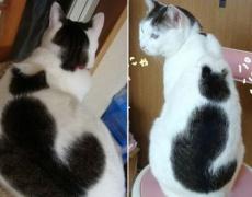 Забележителните Котки
