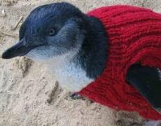 109-годишен мъж плете пуловери за пингвини