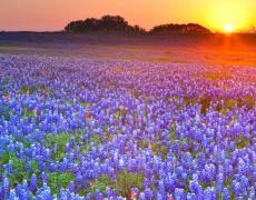 6 начина срещу пролетна алергия