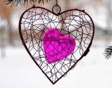 Сърцето и умът...