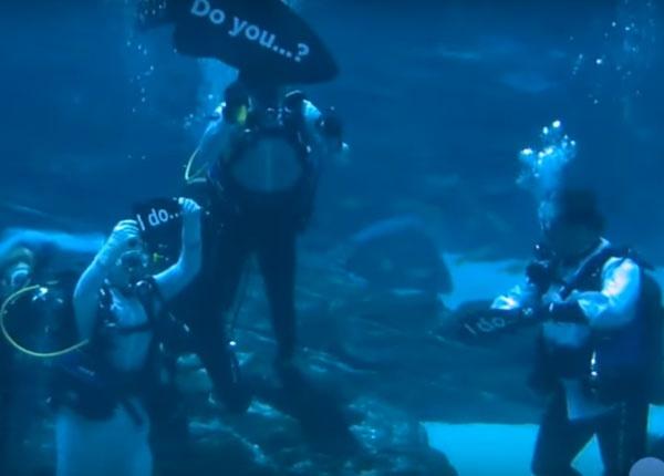 Невероятна сватбена церемония в аквариум