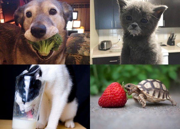 Най-сладките снимки на животни, които си похапват