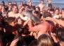 Туристи убиват делфинче заради няколко селфита