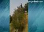 Спасителна акция за козел, заклещил рогата си на електрически жици