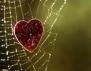 Притча за отровата, която носим в сърцата си
