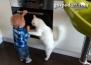 Котка не дава на бебе да си играе с печката