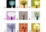 Тест: Изберете си дърво и разберете каква личност сте