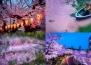 17 невероятни снимки от цъфтежа на японските вишни