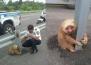 Добро дело! Полицаи спасиха ленивец на пътя