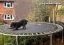 Куче, което е достойно за цирков артист