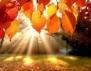 Притча за Есента, която ни помага да разберем желанията си