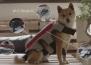 Ново устройство ще записва любимите моменти на вашето куче