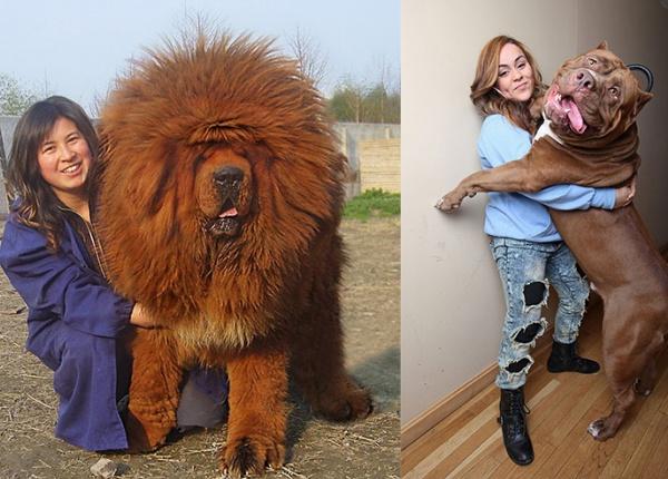 10 огромни кучета, които ще ви накарат да се усмихнете