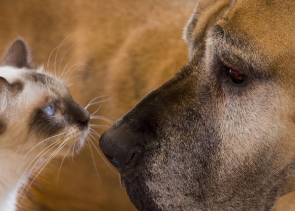 Котките или кучета са по-популярни в интернет?
