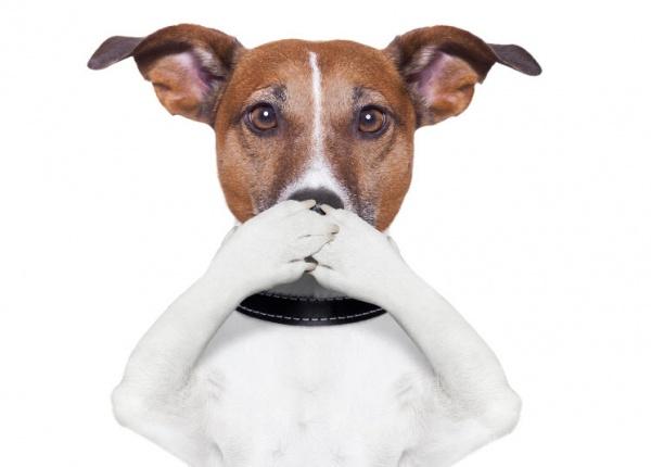 13 неща, които вашето куче не обича да правите