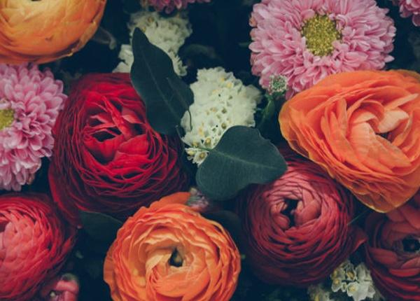 Какво е значението на 10-те най-популярни цветя