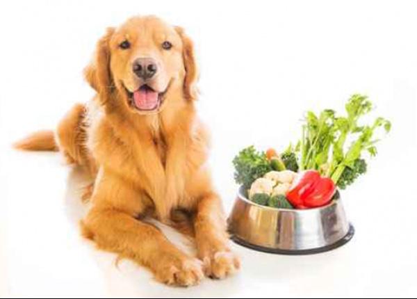 8 здравословни храни за вашето куче