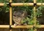 Многото лица на уличните котки в Токио