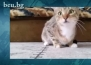 Котка, подложена на много интересен експеримент