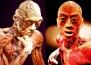 20 невероятни факта за човешкото тяло, които не знаем
