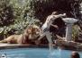 Какво е да живееш с лъв?