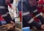 Пожарникар стана интернет сензация, след като спаси живота на куче