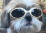 Куче с очила стана сензация в интернет