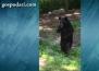 Мечка ходи изправена на разходка из квартала