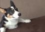 Кученце показва как се справяме с работната седмица
