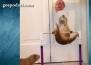 Мотивираща гимнастика за хамстери