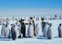 Как реагират пингвините на оперно пеене?