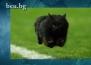 Котка на ръгби мач подлуди фотошоп маниаците