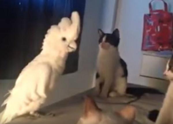 Папагал  в компанията на котки!