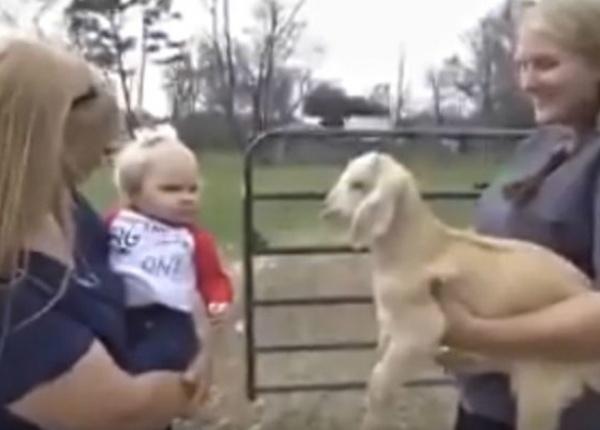Разговор между бебе и козле